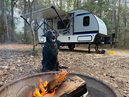 Cooper the Camper Dog