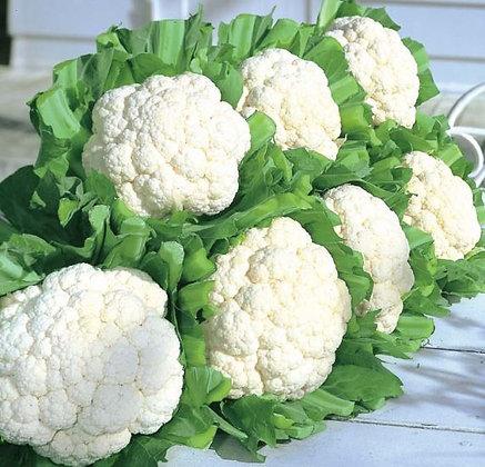 Cauliflower- Snow Crown
