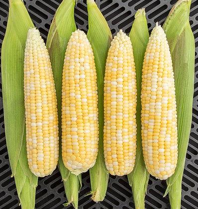 Corn- Allure
