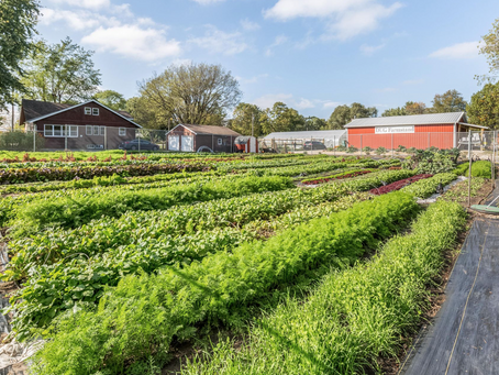 Sustainable Farming at Dogpatch Urban Gardens