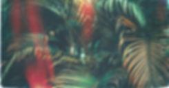 dark palms.jpg