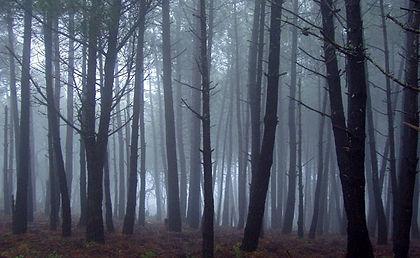 Bosque de Niebla.jpg