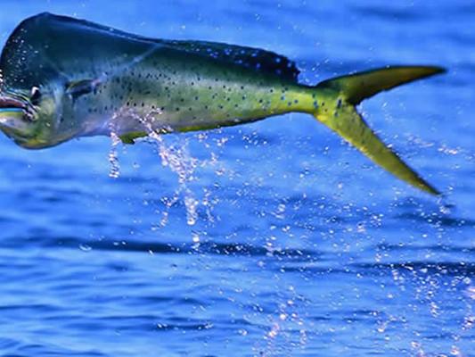 guanacaste sport fishing (4) - copia.jpg
