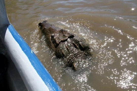 samara_palo_verde_boat_tour_costa_rica_i