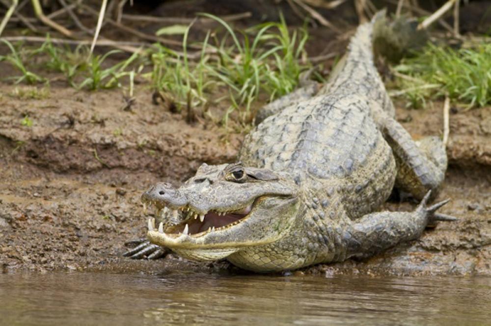 Crocodile-Palo-Verde-Boat-Safari-Natives