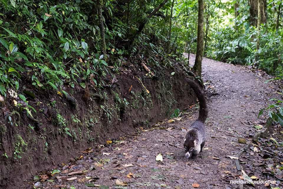 5-Monteverde-Bosque-Nuboso-Animal.jpg