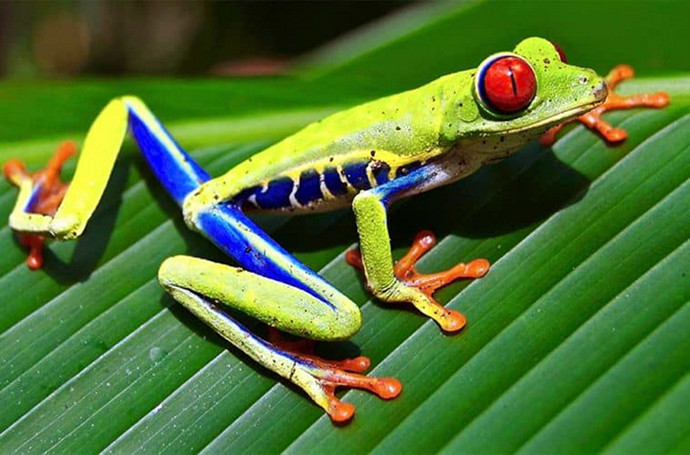 find-unique-tree-frog-gifts-759x500.jpg