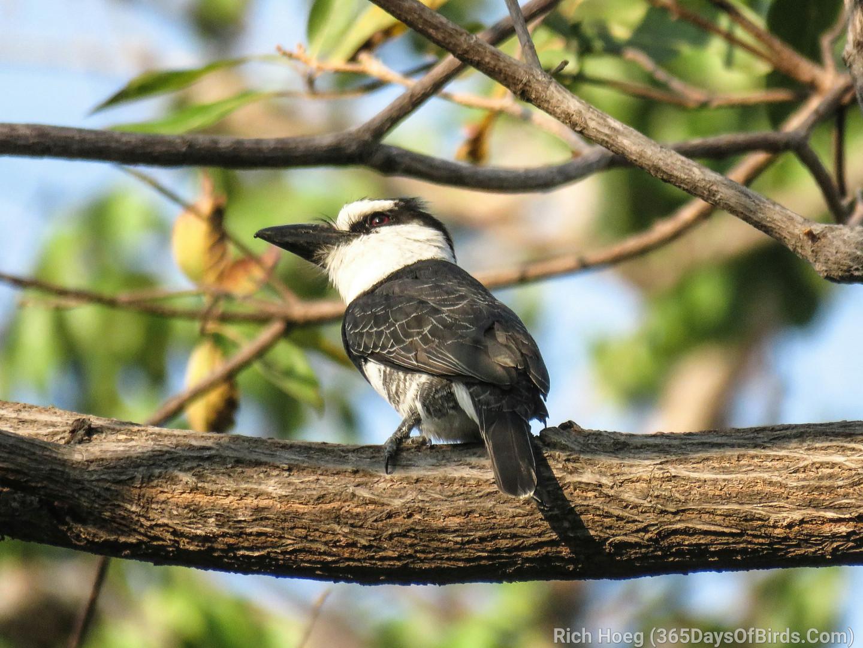 Y4-M04-Costa-Rica-Unknown-Bird-A3_wm-1.j