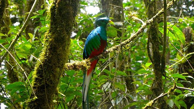 monteverde-costa-rica-650x366.jpg