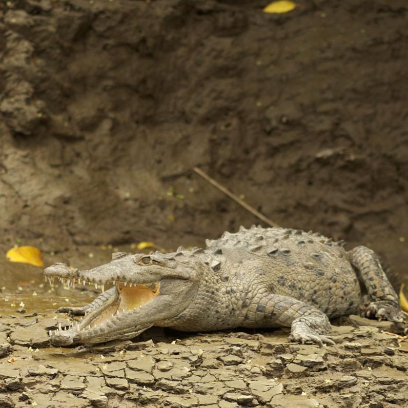 parque-nacional-palo-verde-in-guanacaste