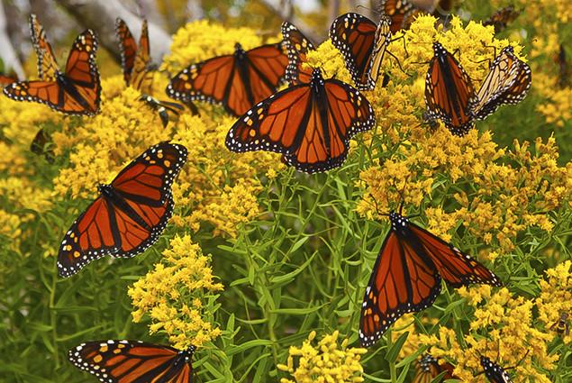 mariposa-3.jpg