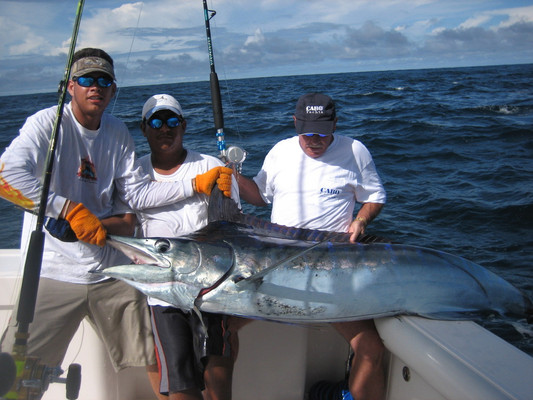 flamingo_fishing__costa_rica.jpg