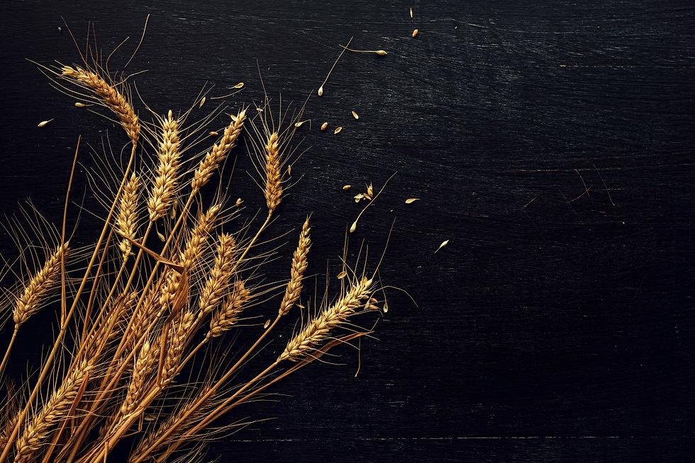 Rye Grain ES Distillery