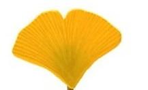 lot-de-2-barrettes-feuilles-de-ginkgo-ja