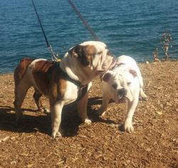 Otto and Piper sept 25 2015