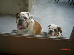 previous pup new site eaty mugsy 2