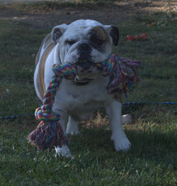 Patches oct 17th front view