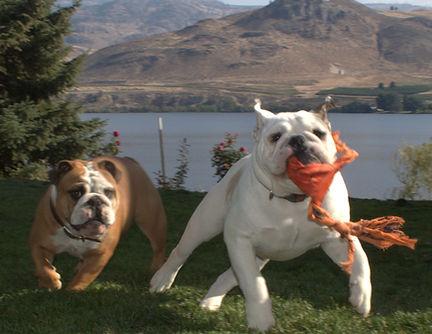 Lake Valley Bulldogs, Bulldogs in Washington State