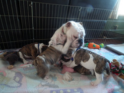 blu with patches and ozzie pups