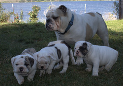 blu with babies for website