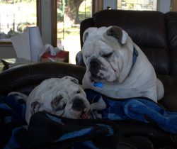 Lilly and Blu april 23 2013-001 smaller