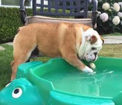 hanley and pool june 2015 2