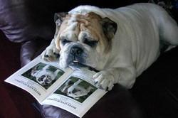 spot looking at bca mag