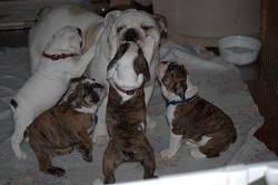 Blu with pups for website