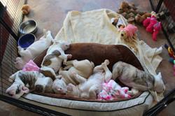 Diva blu pups for facebook 2