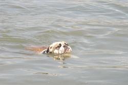 Dot-swimming