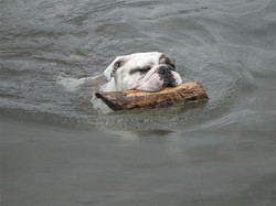 patches swimming for new site new 1