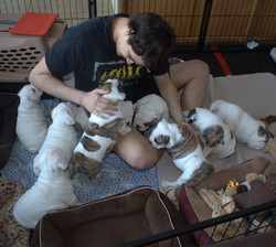 charlie and pups for website 2