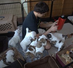 charlie and pups