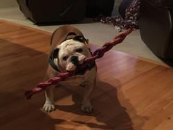 Rogan with his big bullie stick