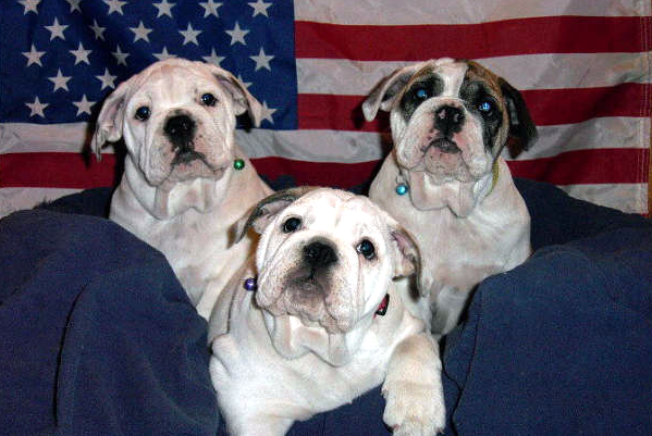 pups with flag background_edited