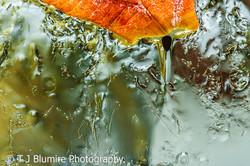 Frozen Leaves 8