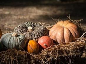 Festa della zucca 8- 9- 10 ottobre 2021