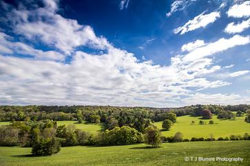 Surrey Hills 3