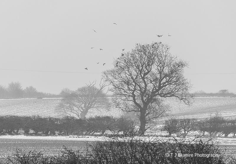 Snowy Norfolk 4