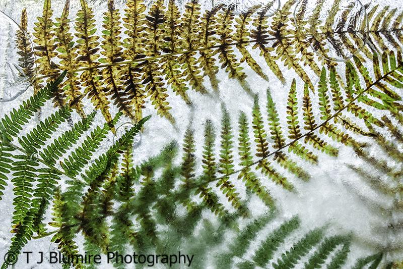 Frozen Leaves 9