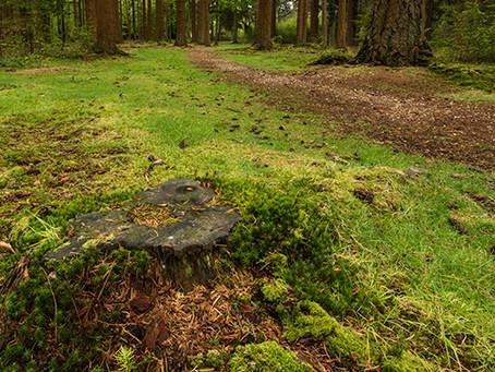 New Forest Landscape Workshop