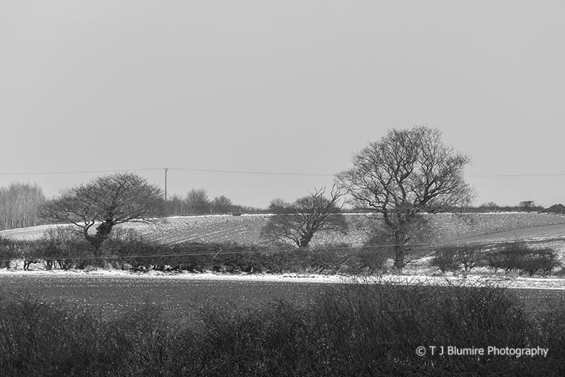 Snowy Norfolk 6