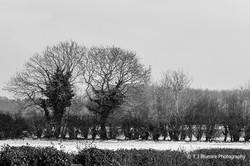Snowy Norfolk 5