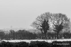 Snowy Norfolk 3
