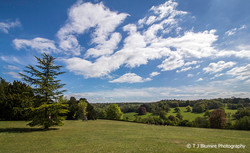 Surrey Hills 4