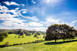 Surrey Hills 2