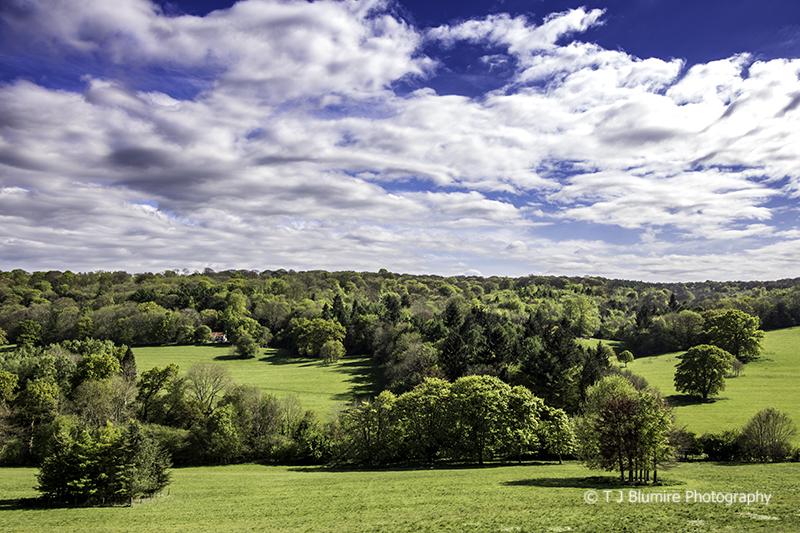 Surrey Hills 1