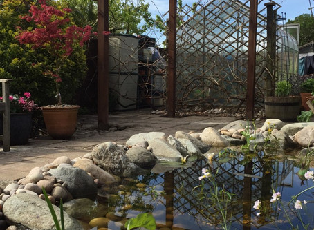 Composing & Pond Projects