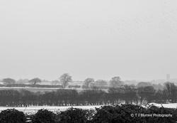 Snowy Norfolk 2