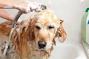 Flea Bath.jpg